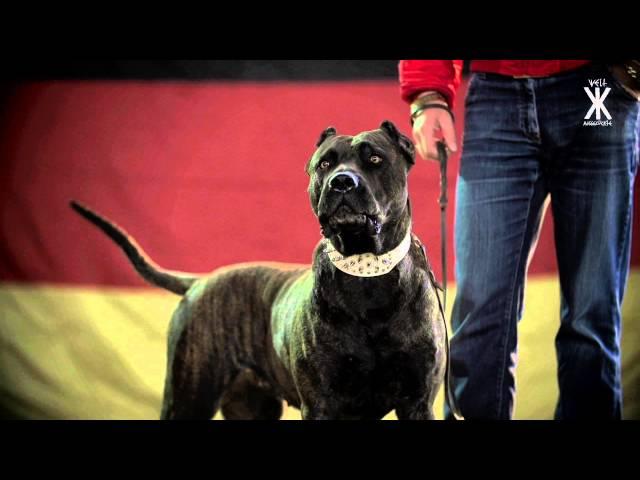 Swiss - Schwarz Rot Braun