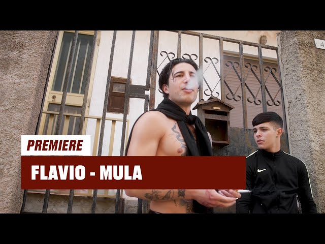 Flavio - Mula