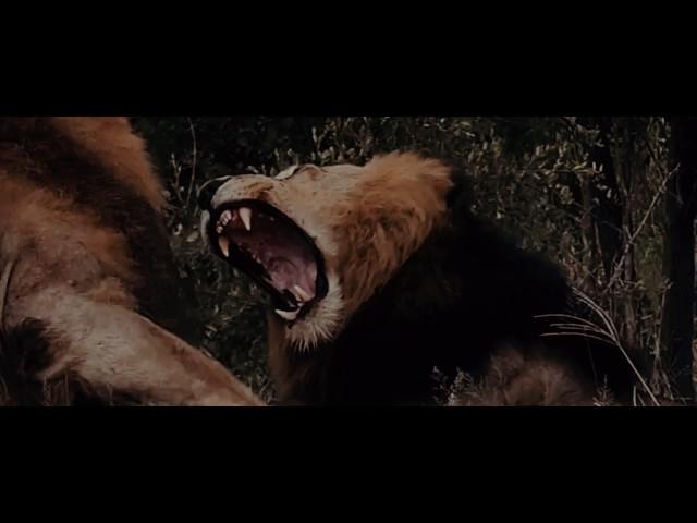 Manuellsen - Der Löwe